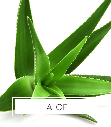 Africa's Best Ingredients - Aloe
