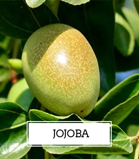 Honey Castor Jojoba